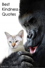 Best Kindness Quotes