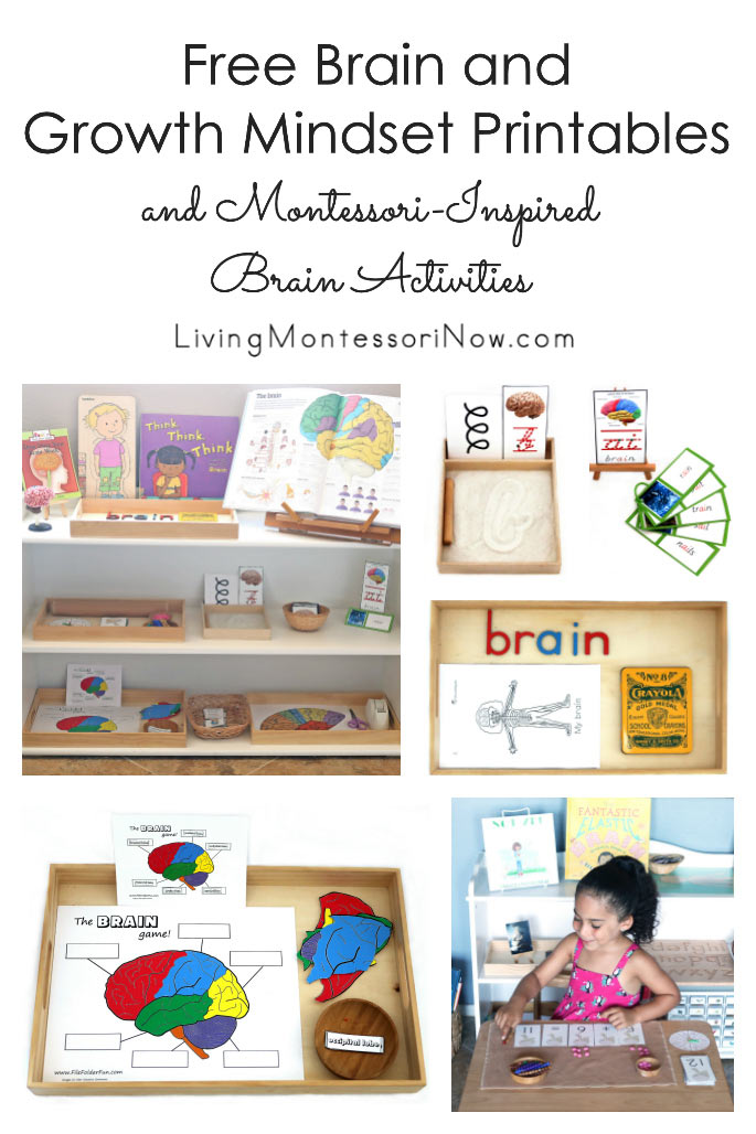 Free Brain and Growth Mindset Printables and Montessori-Inspired Brain Activities