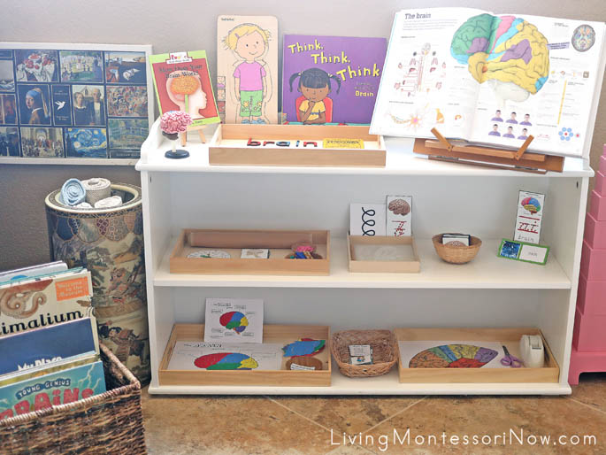 Montessori Book Basket and Shelves with Brain-Themed Books and Activities